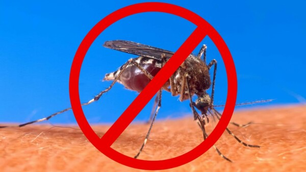 Keep Mosquitoes Away… Without Bug Repellent!