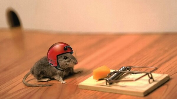 How to Make an Emergency Mousetrap