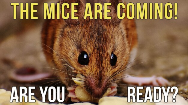 How to Keep Invasive Mice Out of Your RV, For Good!