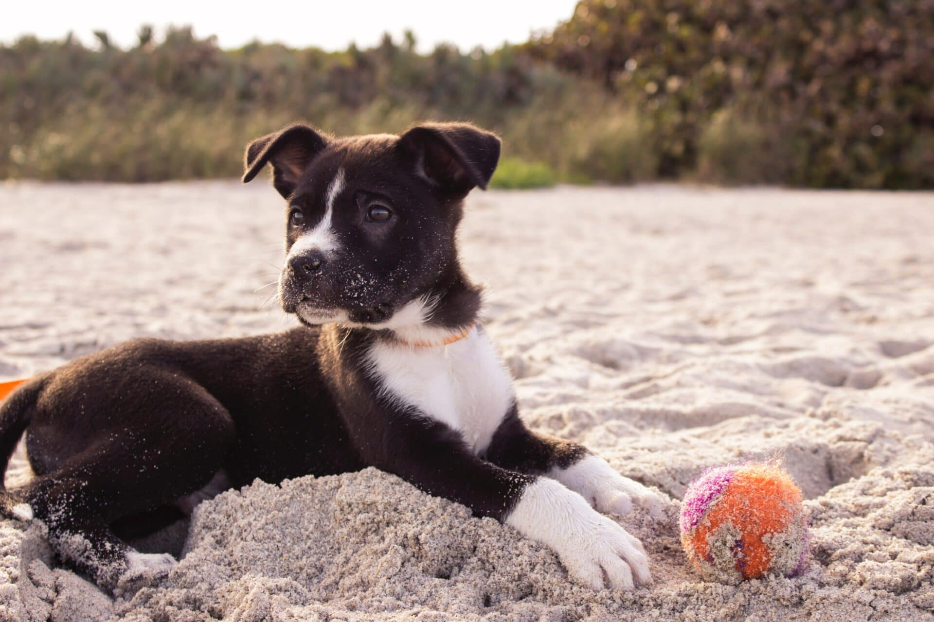 Washable rugs help deal with sand from pets